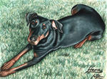 Arts And Dogs - Dobermann